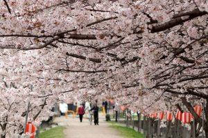 Cuộc sống ở Nhật Bản có gì đặc biệt?