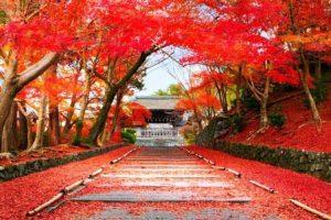 Nhật Bản mùa lá đỏ: Khám phá vẻ đẹp đắm lòng du khách