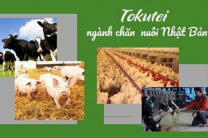 Đơn tuyển Tokutei Chăn nuôi có tốt không? Công việc thực tế ra sao?