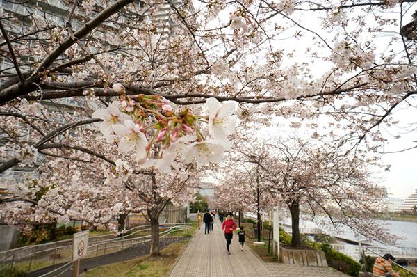 Cảnh đẹp Nhật Bản mùa xuân