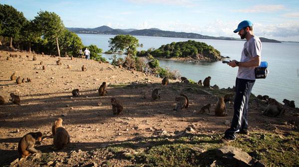 Đảo khỉ - Cayo Santiago, Puerto Rico