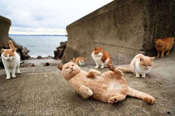 Đảo mèo Enoshima – tỉnh Kanagawa