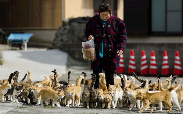 đảo mèo ở Nhật nổi tiếng