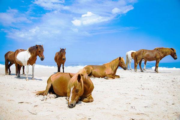 Đảo ngựa – bang Maryland, Mỹ