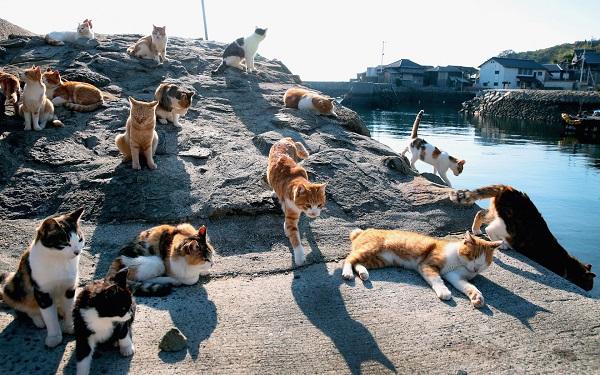 đảo mèo ở Nhật