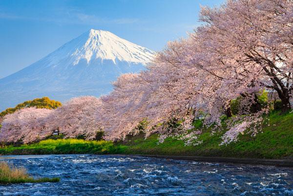 Núi phú sĩ mùa xuân