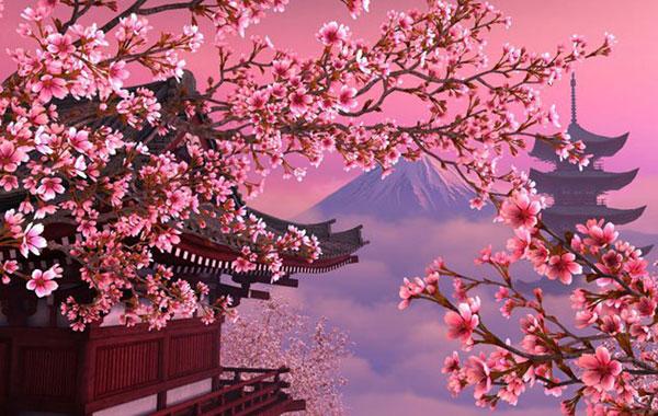 hoa anh đào Nhật Bản – Sakura