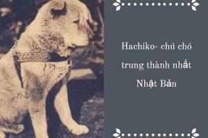 Chú chó Hachiko Nhật Bản – Biểu tượng của lòng Trung Thành?