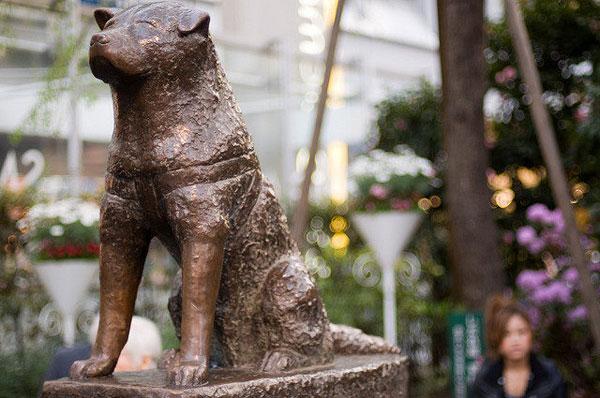 Bức tượng chú chó Hachiko