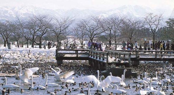 Hồ Hyo