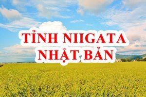 Tỉnh Niigata Nhật Bản – Vùng đất của Gạo, Rượu và Gái Đẹp