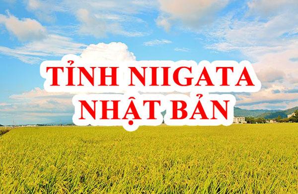 tỉnh Niigata Nhật Bản