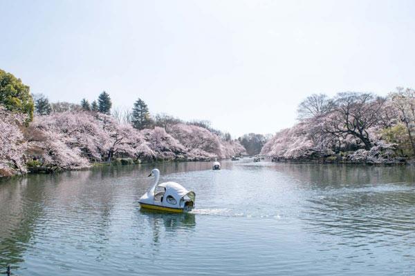 Công viên Inokashira Onshi