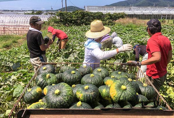Nông nghiệp tại tỉnh chiba